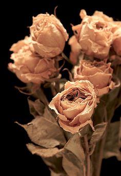 Dried Roses No. 1 [8731] | por dminton