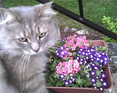 My cat Heath. Courtnay, Brunswick, MD - 2/9/2015