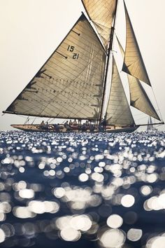 Summer Loving August 7, 2020 | ZsaZsa Bellagio - Like No Other Classic Sailing, Classic Yachts, Sailing Cruises, Sailing Ships, Sailing Yachts, Cruise Italy, Sailing Holidays, Boat Rental, Boat Hire