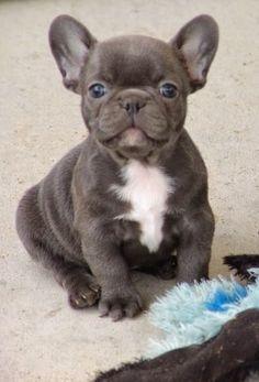 Pet's We Love: Top 5 Amazing Bulldog Puppies