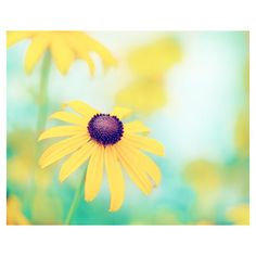 Flower Photography yellow turquoise teal colorful mint blue green... ($35) ❤ liked on Polyvore featuring home, home decor, wall art, teal home decor, aqua home decor, floral wall art and floral home decor