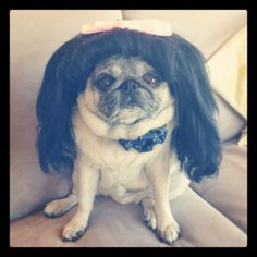 How @ModCloth is dominating social media (this pug is part of the strategy)