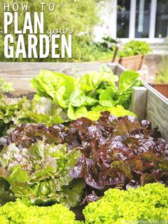 I know growing a garden is the best way to cut grocery expenses, but knowing how to get started can be overwhelming.Use this eginner's guide to plan your garden to maximize your space, effort and crop yield and make the most out of your garden this year! Edible Garden, Easy Garden, Growing Plants, Growing Vegetables, Organic Vegetables, Gardening For Beginners, Gardening Tips, Natural Living, Garden Planning