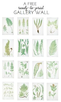 Ready-To-Print Gallery Wall: Fern Botanicals w/link to other free artwork Illustration Botanique, Botanical Illustration, Free Artwork, Free Prints, Botanical Prints, Botanical Gallery Wall, Ferns, Diy Wall, Wall Decor