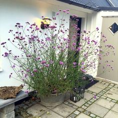 Home Terrace Garden Inspirations, You Must Like It! Gravel Garden, Terrace Garden, Garden Pots, Garden Landscaping, Terrace Ideas, Cottage Garden Design, Small Garden Design, Container Plants, Container Gardening