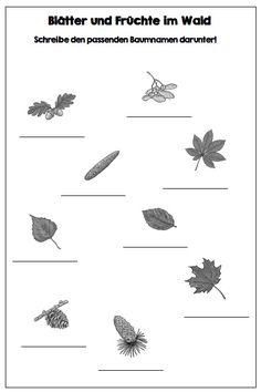 Zur Zeit bietet sich das Thema Wald sehr gut an. Ich habe zwei Arbeitsblätter zum Zuordnen und Verbinden der Bäume mit ihren Blättern und Fr... Kids Learning, 3c, Homeschooling, Kindergarten, Lisa, German, Printables, Teacher, Nature