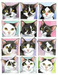 www.maggieswanson.com Black and White Cats
