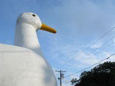 Long Island Duck!