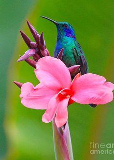 "2019 DIY Diamond Painting ""Hummingbird Flower"" - 23 Designs to Choose! Pretty Birds, Love Birds, Beautiful Birds, Animals Beautiful, Exotic Birds, Colorful Birds, Animals And Pets, Cute Animals, Hummingbird Pictures"