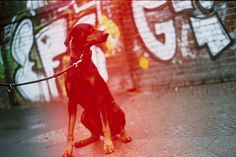 Red Dog by Eduardo Navarro on Red Dog, 35mm Film, Red Color, Chill, Dogs, Photography, Photograph, Doggies, Photo Shoot