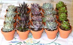 succulents in terracotta pots - wedding favours