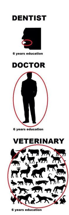 Human nurses go to school for 4 years to learn one job on one species. Veterinary technicians go to school for 2 years to learn 7 jobs on multiple species!