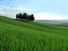 #Tuscan #countryside in #spring! #Wonderful!  #siena #tuscany #italy #travel