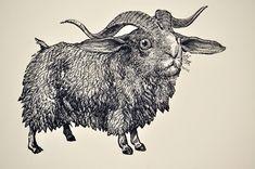Schaf-Hase TBB Erde H010