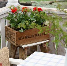 Geraniums in a crate