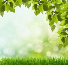 Free PPT Backgrounds for PowerPoint Templates - Beautiful green grass PowerPoint Free Backgrounds High Quality.