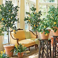 Orange and lemon trees surround an antique settee in an orangery at the Bartow-Pell Mansion Museum in the Bronx, New York.    Victoria Pearson