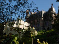 #Finistere #Bretagne et...: #Trevarez : des fleurs, évidemment (6 photos)  © Paul Kerrien  http://toilapol.net