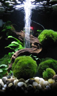 Aquascaping můj BiOrb Flow