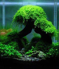 Mooie aquascape toch? http://ift.tt/2vMM8Ai