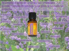 El aceite de lavanda toda una experiencia de relajación  www.saluddoterra.com