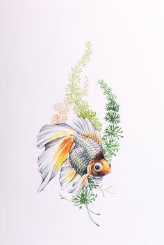 Goldfish -Watercolor