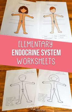 biology science Learning about the human body These elementary endocrine system worksheets are just what you need - learn all about the different glands that secrete hormones and their functions in the endocrine system. Printable Activities For Kids, Science Activities For Kids, Science Lessons, Science Biology, Free Printables, Kid Science, Science Education, Educational Activities, Science Projects