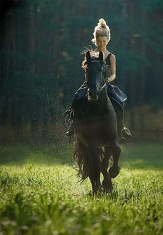 Majestic  www.thewarmbloodhorse.com
