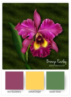 Climbing Orchid, Orchid color combinations