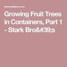 Growing Fruit Trees in Containers, Part 1 - Stark Bro's