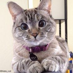 Good catnip!!   ..  @nala_cat (Go to nalacat.com...and order cat nip pizza slices)