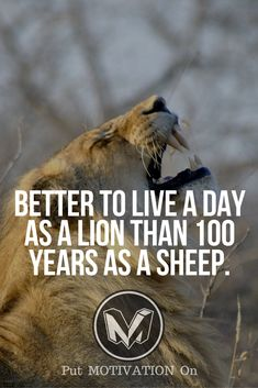 Time to be a Lion