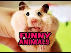 Best Funny Animal Videos Compilation 2014 NEW HD - YouTube