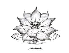 lotus flower with roots - Google Search
