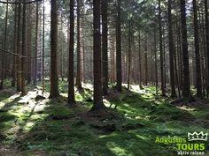 Schierke Altenau Wald © AugustusTours auf https://www.augustustours.de/de/wanderreisen/harz/harzer-hexen-stieg.html