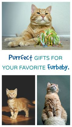 PURRRFECT gifts for the crazy cat lady! (and her cats..)