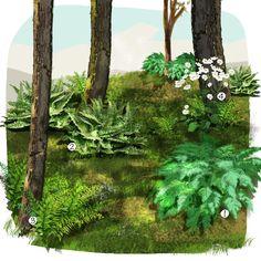 Projet aménagement jardin : Jardin de sous-bois