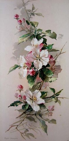 Victorian Rose Prints Gallery : Apple Blossoms Print Catherine Klein Half Yard…