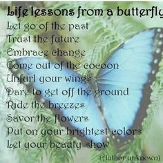 Life Lesson From A Butterfly Butterfly Symbolism, Butterfly Poems, Blue Butterfly Meaning, Butterfly Tattoo Meaning, Butterfly Quilt, Butterfly Party, Butterfly Pictures, Butterfly Decorations, Butterfly Kisses