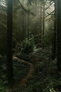 ❤❤❤ Misty forest in Silverton Oregon Area! 15 October 2015 ❤❤❤