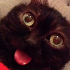 This Cat Who Can't Stop Sticking Out His Tongue Might Just Be the Internet's Cutest Feline