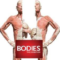BODIES...The Exhibition - included attraction on the New York Explorer Pass!