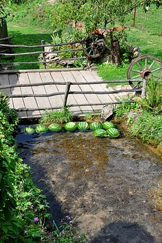"~} ""Watermelon cooling at waterfall Lisine near Despotovac in Serbia"""