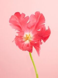 Turban, Narcisse, Spring Flowers, Art Inspo, Plants, Painting, Tattoo, Plant Identification, Gardening