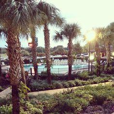 Hotel room view at Rosen inn point Orlando Florida Travel, Orlando, Holidays, Room, Bedroom, Orlando Florida, Holidays Events, Holiday, Rooms