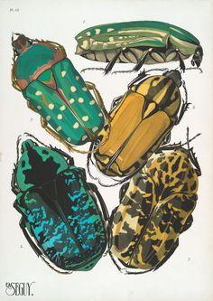 (1928) 1. Rhabdotis sobrins, Nubie; 2. Gnathocera varians, Sénégal; 3. Clorhina guttata, Guinée; 4. Euchrea celestis, Madagascar; 5. Gymnetis Touchardii, Vénézuela