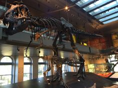 Brian Switek on Twitter: Baby T. rex weren't just like their parents. The tyrants changed dramatically as they grew up. @NHMLA #FossilFriday