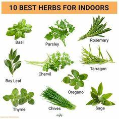Home Vegetable Garden, Herb Garden, Green Garden, Healing Herbs, Natural Healing, Regrow Vegetables, Herbs List, Cooking Herbs, Magic Herbs