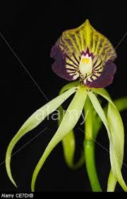 florida native orchids - Google Search