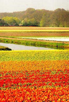 ✯ Keukenhof Gardens - Holland
